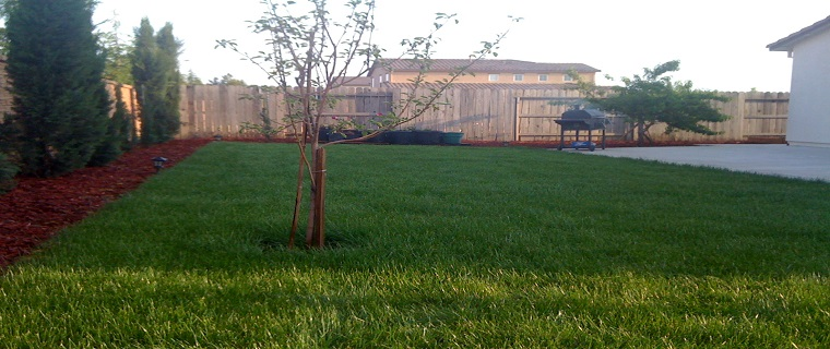 Cheap Sod Prices Best Grass Sod For Sale In Sacramento